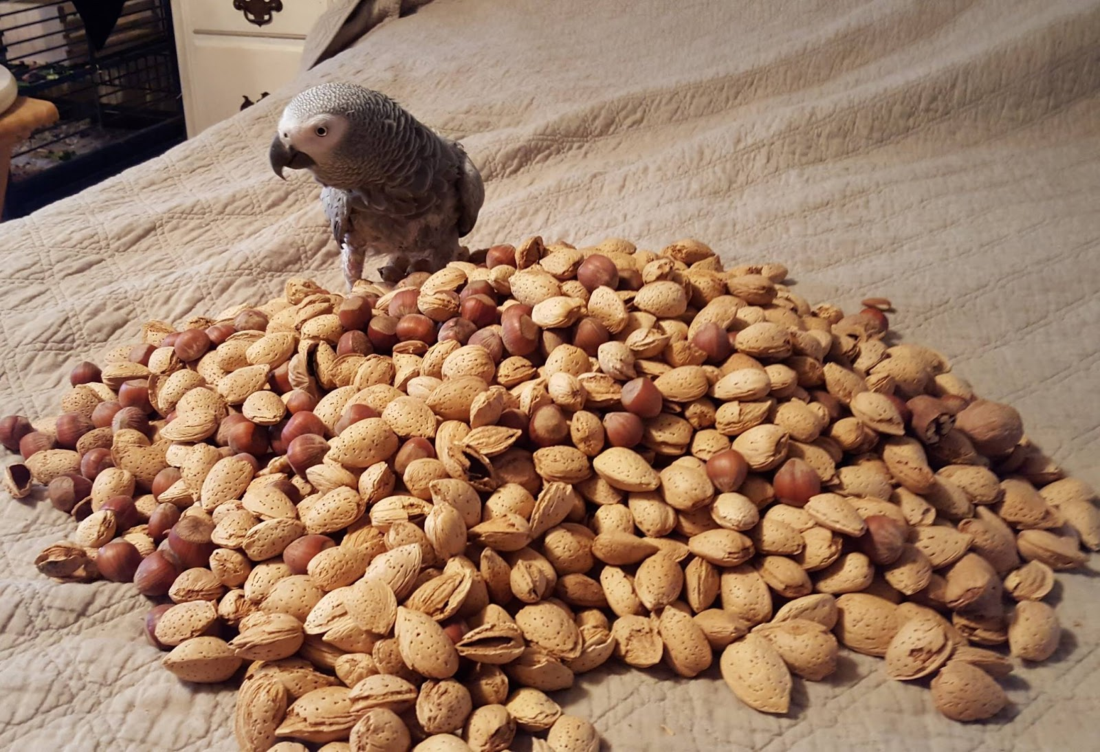 Seed for Parrots