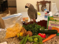African Grey Parrot Food