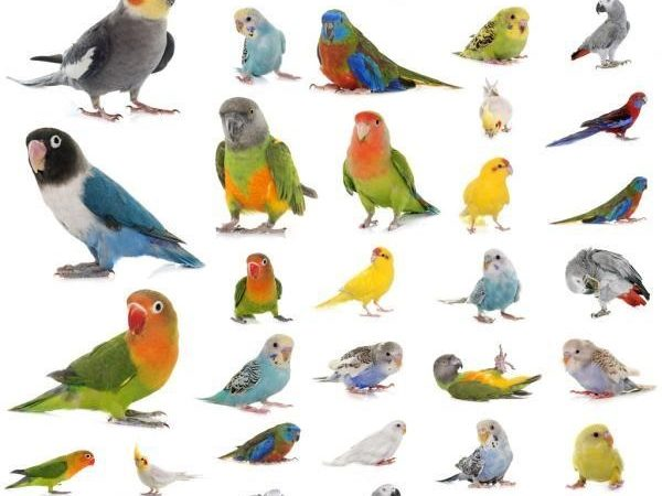 Top 5 Best Parrots For Beginners