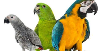 Top 10 Most Popular talking parrot