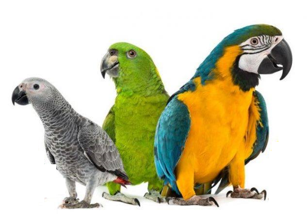 Parrot Types Which one is best for You