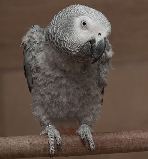 Conditions related to parrot malnutrition