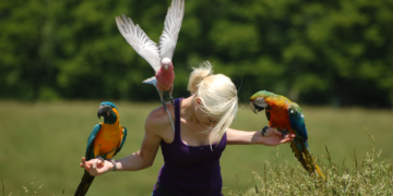 Parrot Flight Training