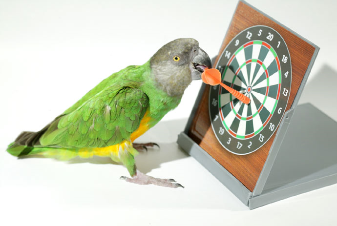 parrot education pet