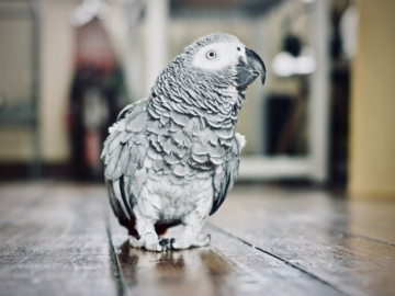 Screening tests for parrots