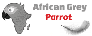 African Parrot Grey health diet personality intelligence and care