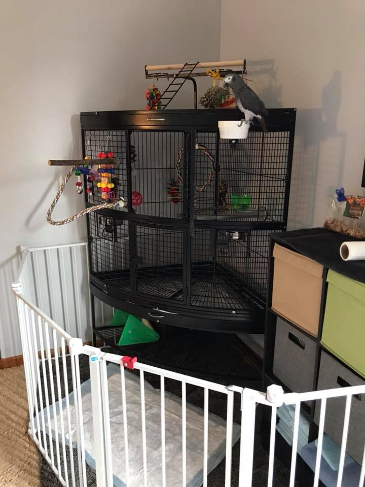 african grey cage