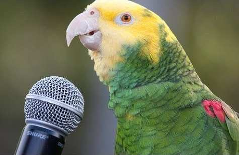 Learning parrot speech