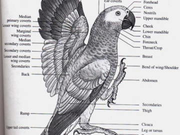 African Parrot Complete Guide
