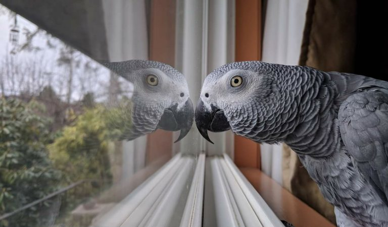 parrot Control Helps Prevent Disease