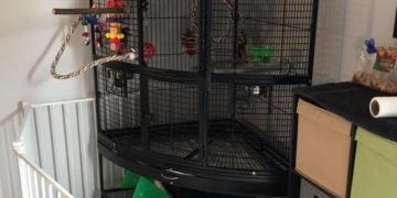 Location And Maintenance of the Parrot Cage