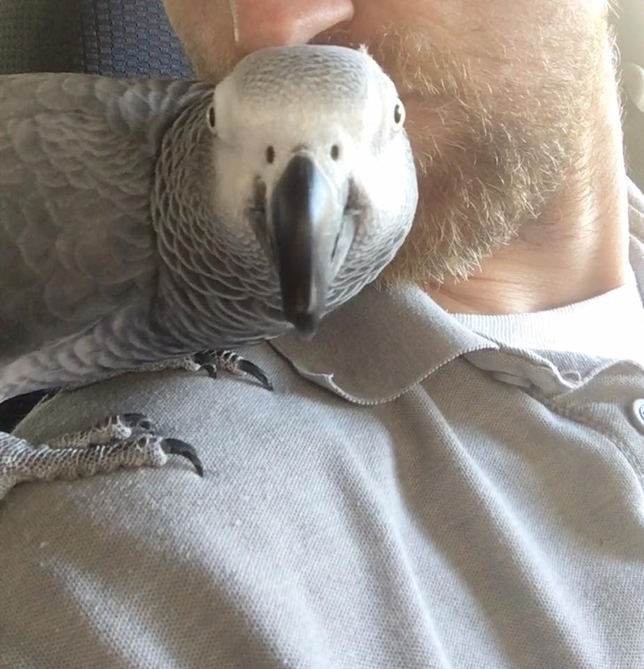 Things to Consider Before Getting parrot