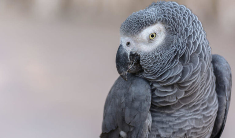 The Ultimate Parrot Quiz