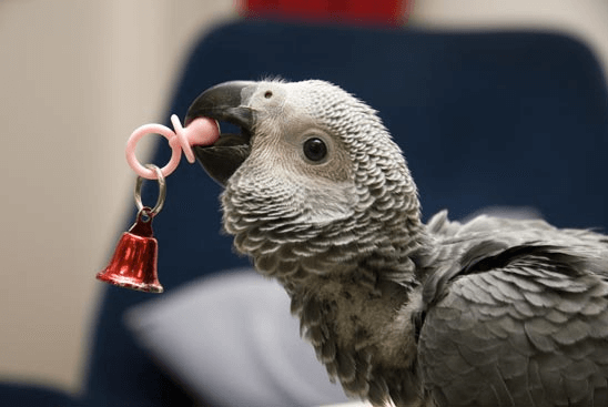 Adopt a Baby Parrot