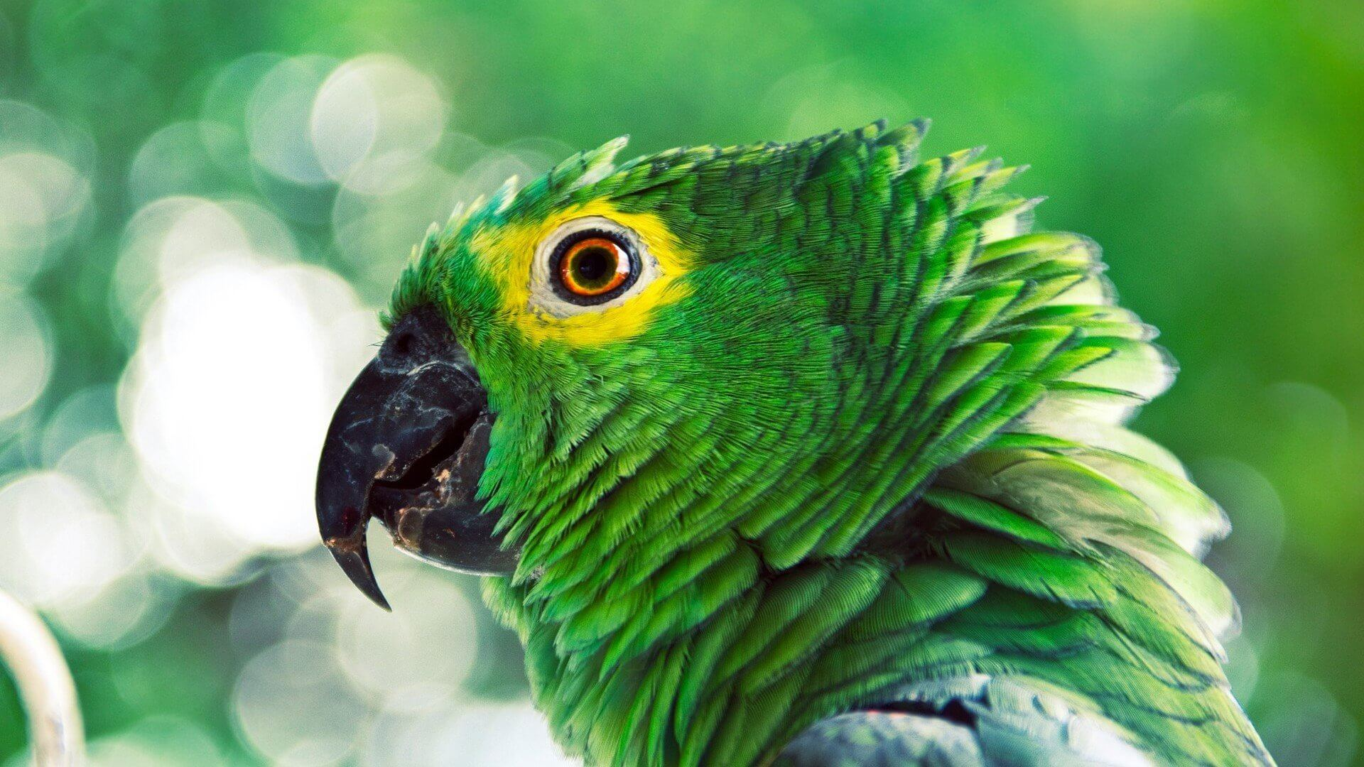 The parrot is an exotic bird