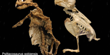 FOSSIL HISTORY OF PARROTS