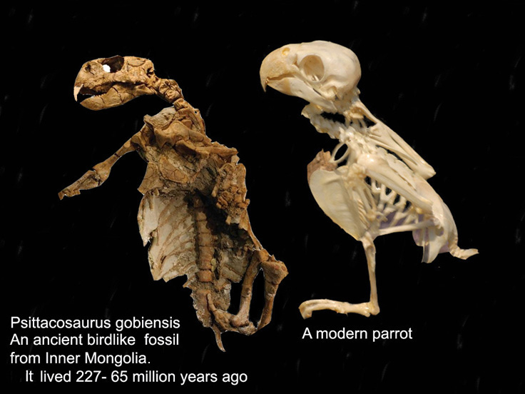 Fossil history of animals parrots
