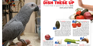 African grey toxic foods