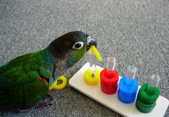 Interactive Parrot toys