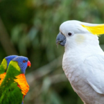 Different reasons why a parrot would stop talking