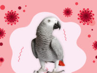 Can My Parrot Be Covid-19 Infected