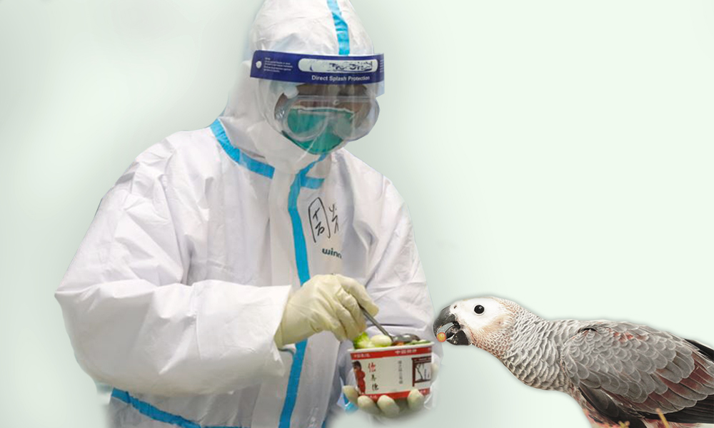 Can My Parrots Be Covid-19 Infected