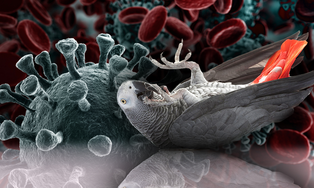 Can Parrot Be Covid-19 Infected