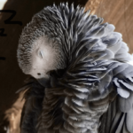 How long does a parrot sleep