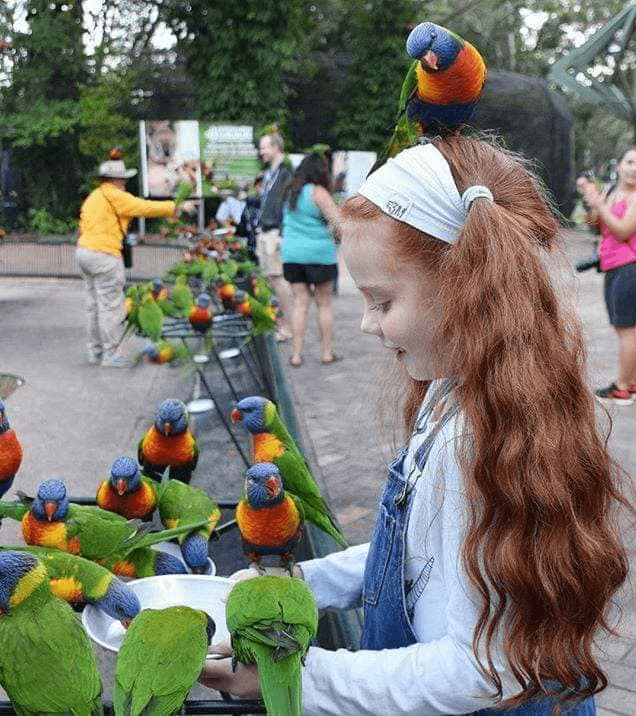 Parrot facts for kids