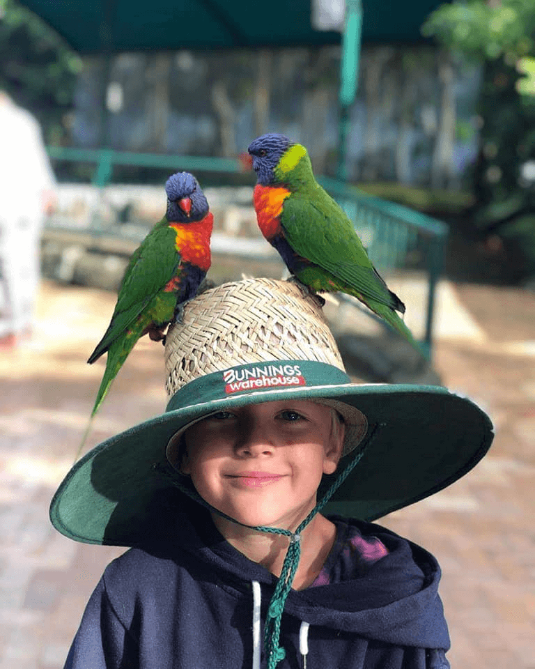 The child and the parrot