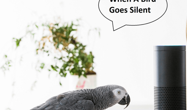 Why does my Parrot stop speaking?
