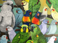 drawing parrot art