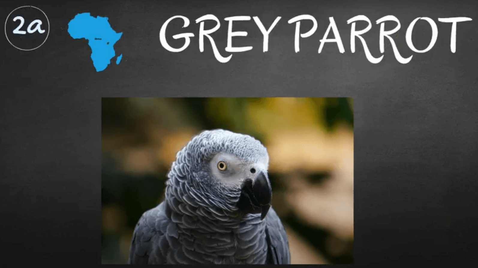 where do african grey parrots live