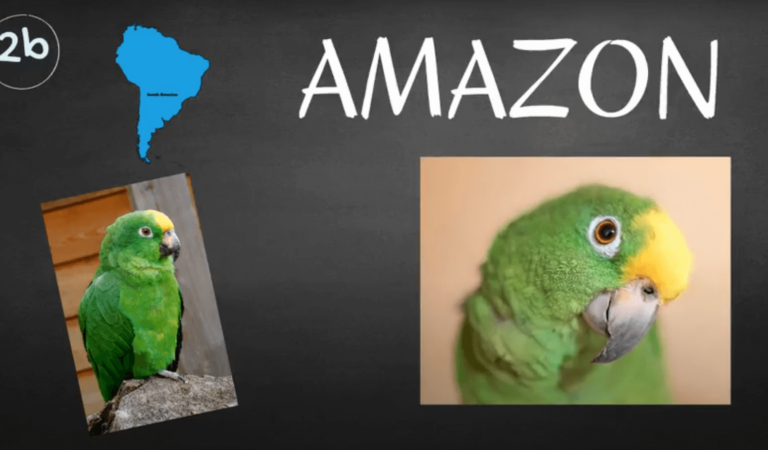 How to Take Care of an Amazon Parrot