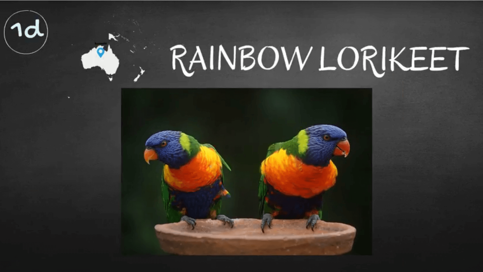 where do rainbow lorikeet parrots live