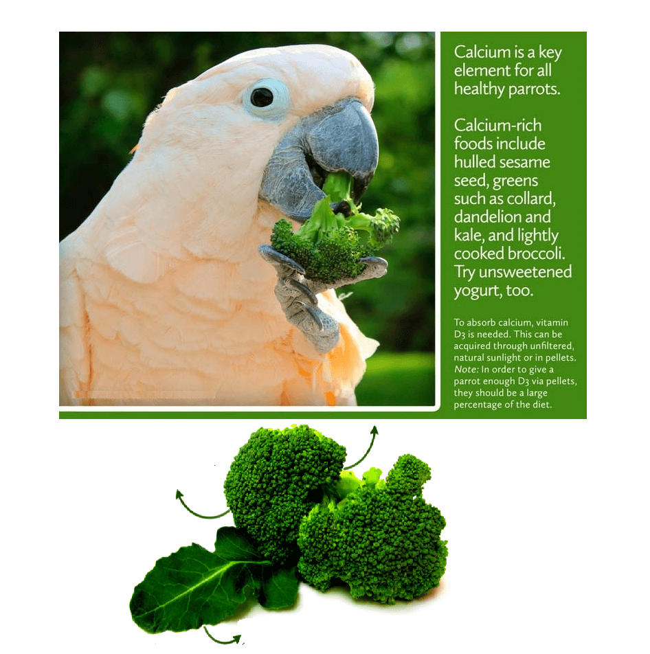 Benefits of broccoli for parrot