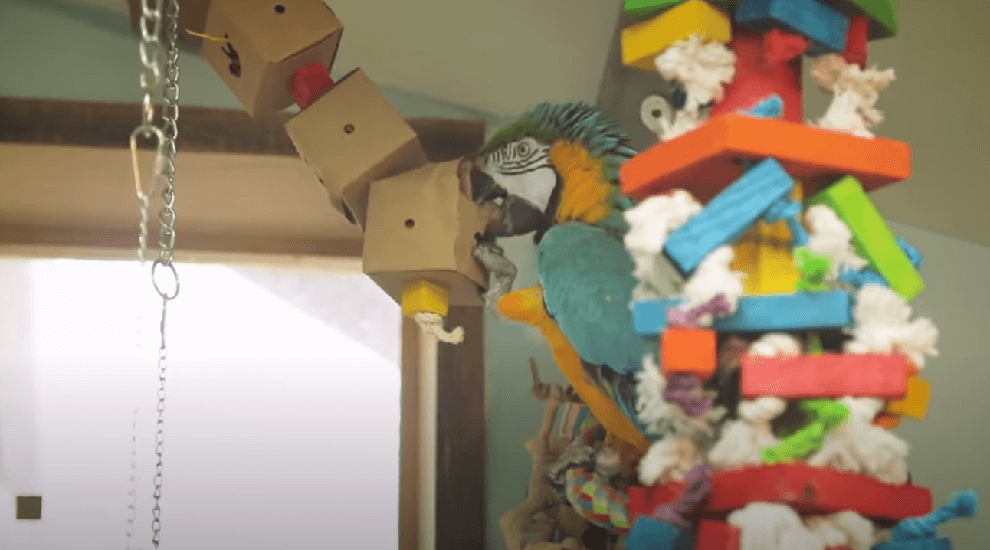 macaw parrots room toys