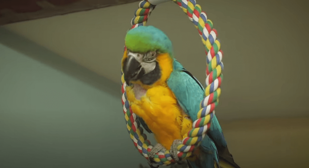 macaw room toys