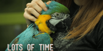 macaws need so much time