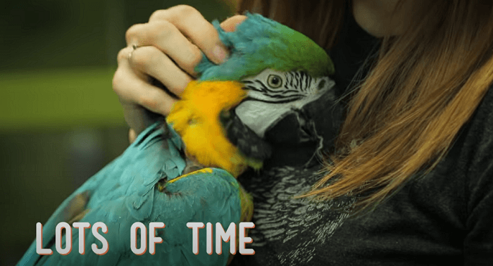 How To Keep Your Parrot Healthy