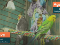 parrot birds roompng