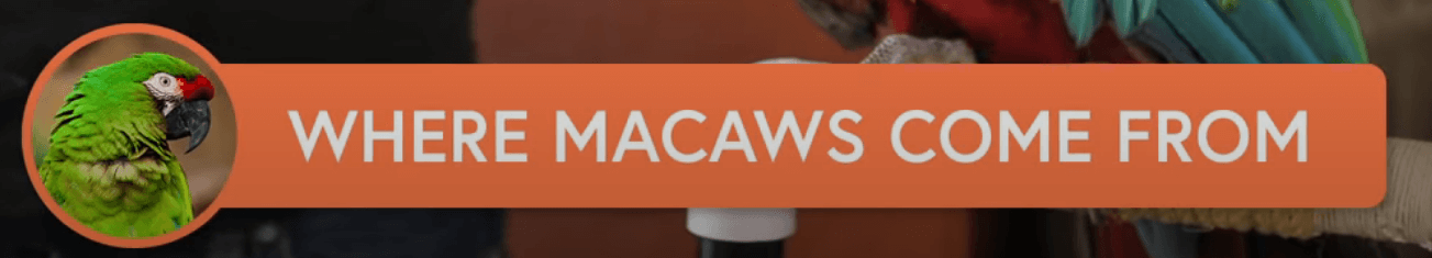 where macaw come from