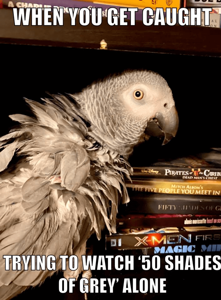 Funny African Grey