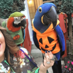 The parrot safe Halloween