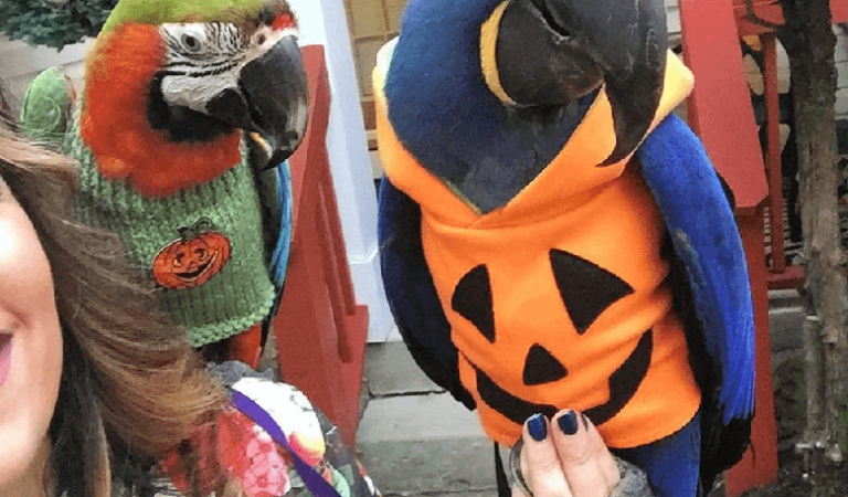 Parrot Safety on Halloween
