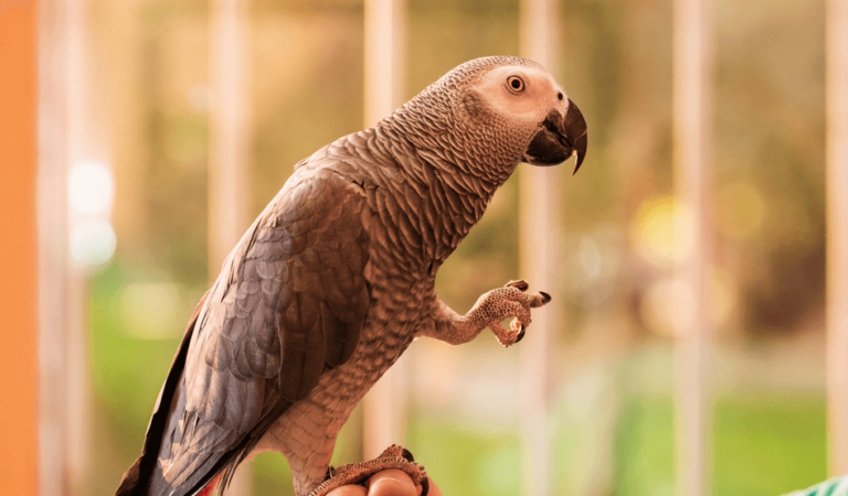Why choose good parrot insurance?
