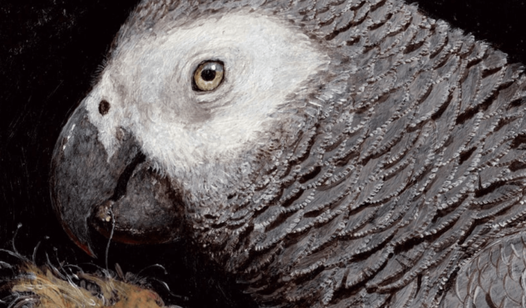 African grey art painting