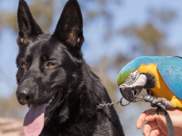 Cohabitation between Parrot and Dog