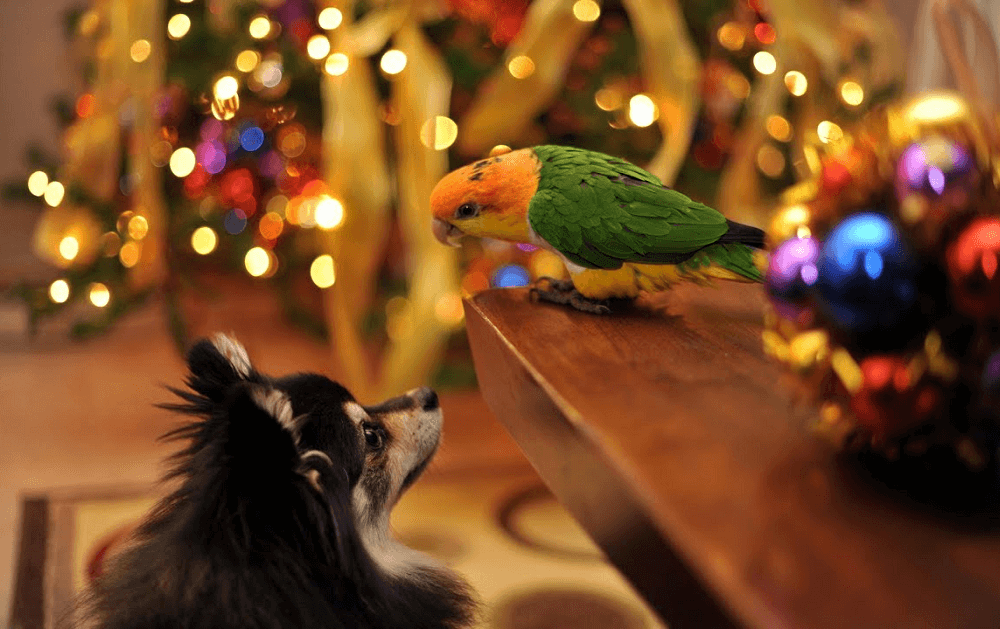Introduce Your Dog to Your Parrot