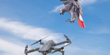 How to fly with a drone with birds